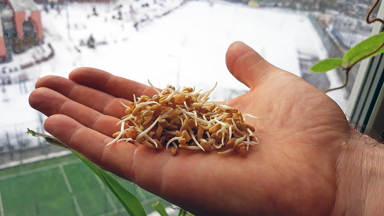 Как проращивать семена в домашних условиях